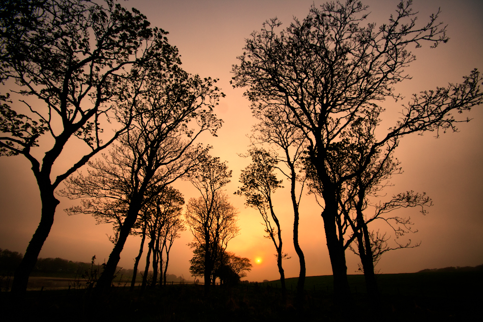Some haze, some sun and some backlit trees at Wick Riverside
